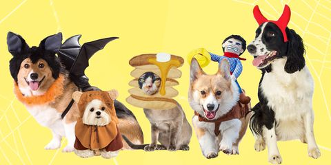 30-creative-halloween-costumes-for-dogs-and-cats-1530124627